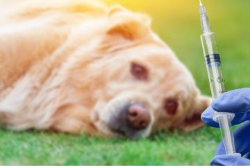 Vaccination Rabies