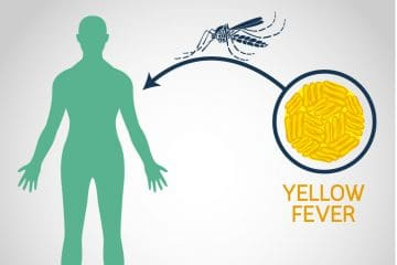 Benefits you get from Yellow Fever Vaccination